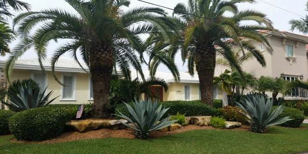 Large palms and landscaping