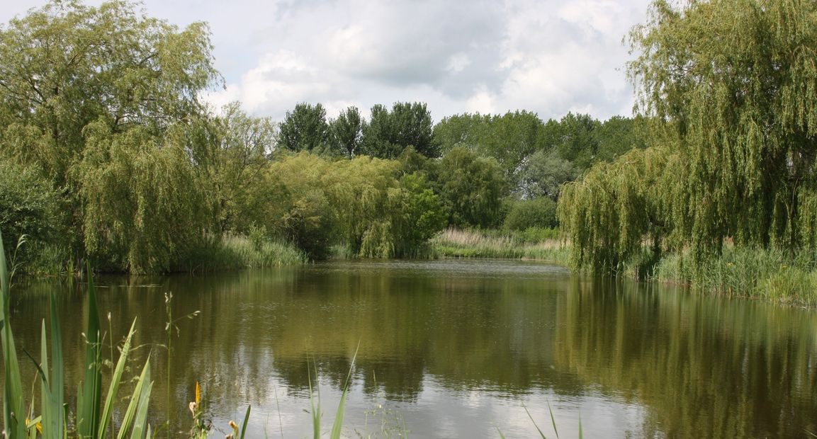 Carp fishing. Day ticket. Exclusive lake hire. Booking a lake. Cambridgeshire.  Uncaught carp