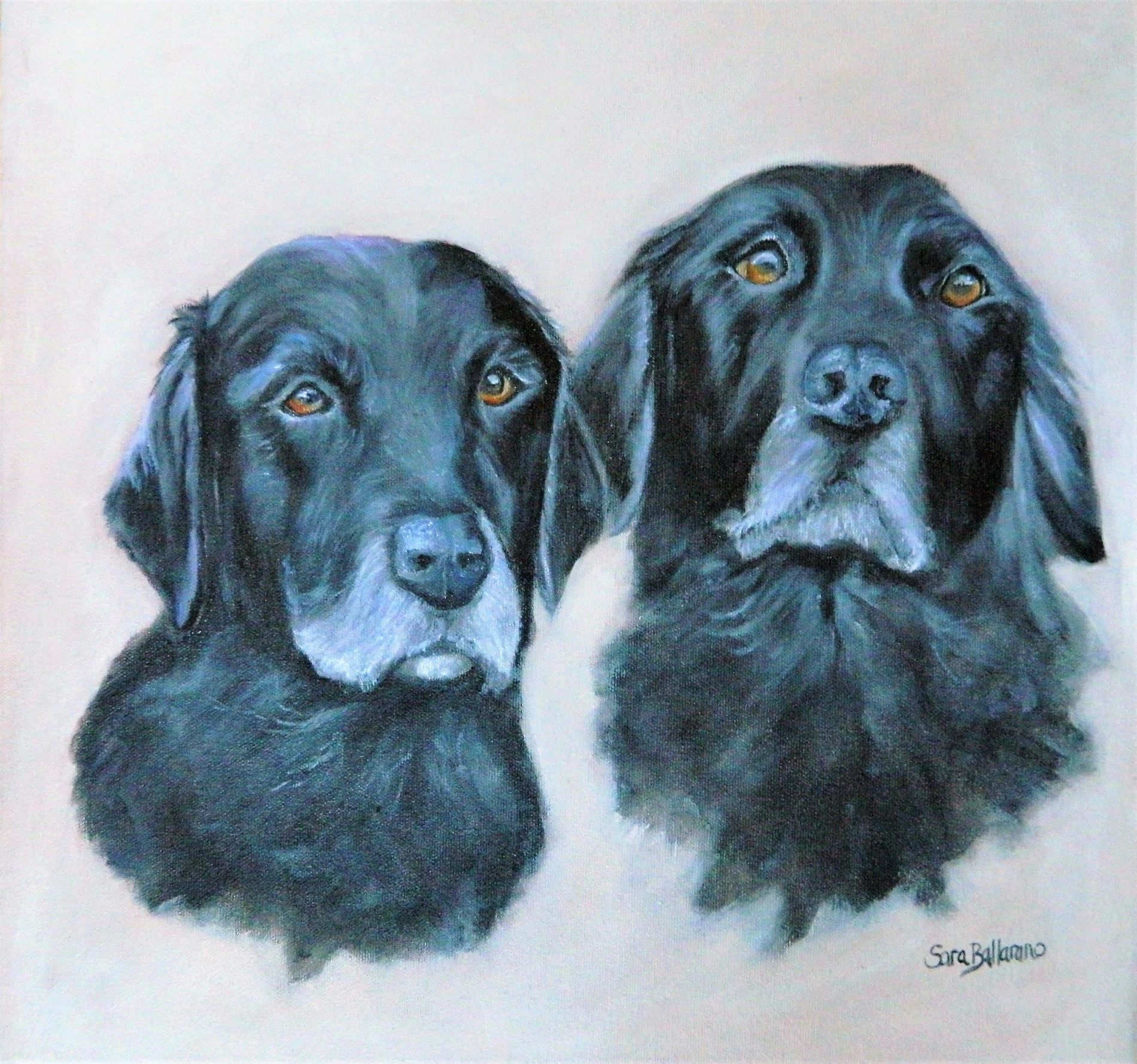 Two black retrievers - Commissions
