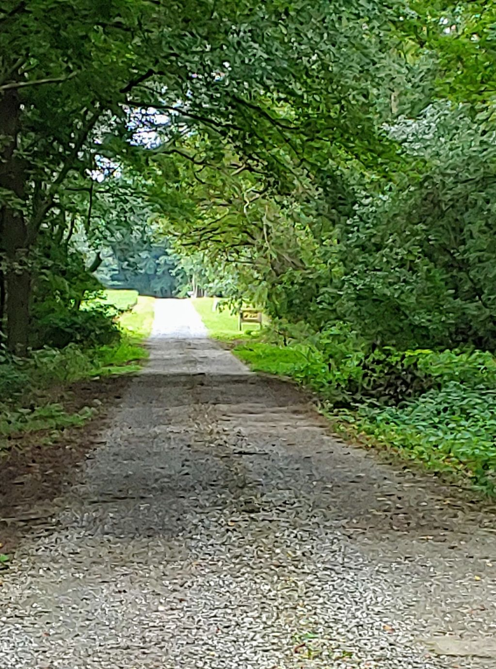The long road leading to the cat sanctuary. Many cats are dropped off  here.  Sarah cares for them.