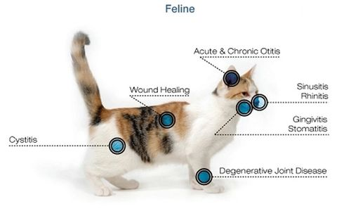 Cat with list of ailments that can be treated with laser therapy