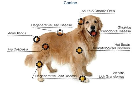 Do with description of ailments that can be treated with laser therapy