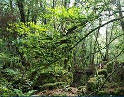 Exploring Puzzlewood in the Forest of Dean