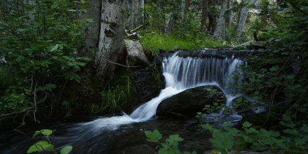Forest woods creek waterfall nature photography