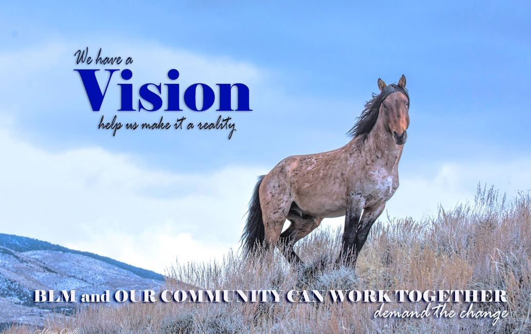 TELL them We need BLM and community to work together to manage our wild horses and manage our range