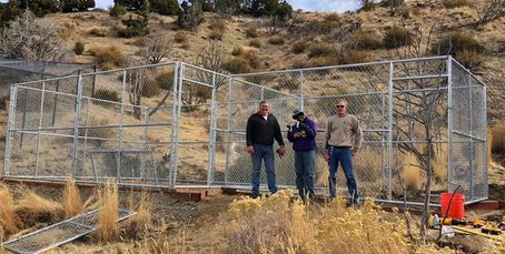Aaron, Tim, Marvin and Gary for making great progress on our new enclosure for Elsie the mountain li