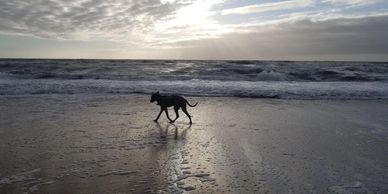 Blu , dog on the beach at sunrise quality of life, bucket list for dog