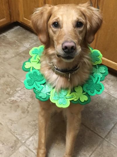 Jax says Happy St. Patty's Day