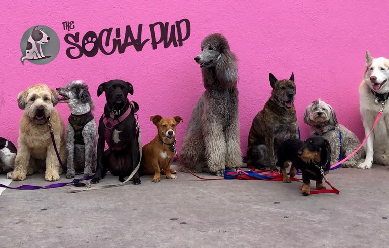 group of dogs at a daycare out of a dog walk
