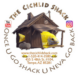 The Cichlid Shack
