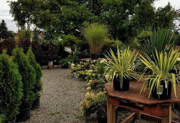 Broadview Landscaping Nursery