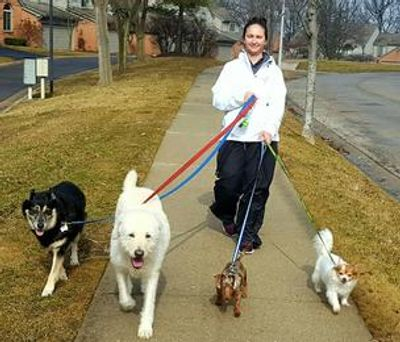 Four Seasons For Paws team member walking four dogs.