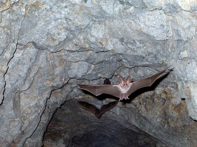 Bow Mar bat removal, Arvada CO bat removal, Aurora CO bat removal, Boulder CO bat removal, Broomfiel