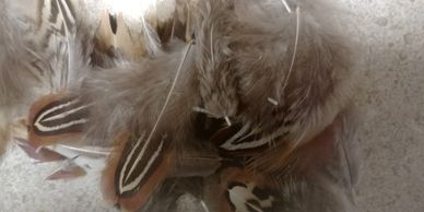 feather leather fur bead claw north craft supply wing hide antler bone