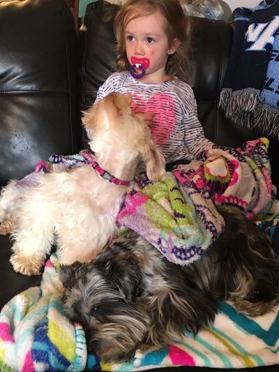 miniature schnauzers love children when they are socialized with them, great family dogs!