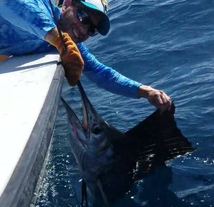 Nice Sailfish caught Live Bait Fishing off of Deerfield Beach
