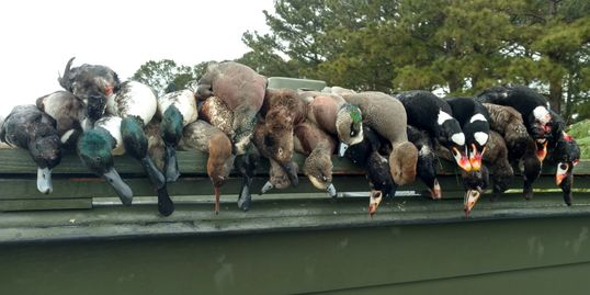 Duck Hunting, Currituck County, North Carolina, Fourth Generation Outfitters