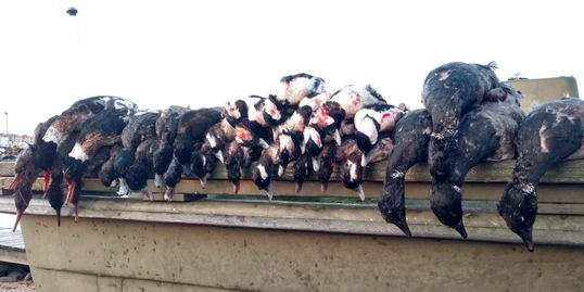 Duck hunting, Chesapeake Bay Virginia, Fourth Generation Outfitters