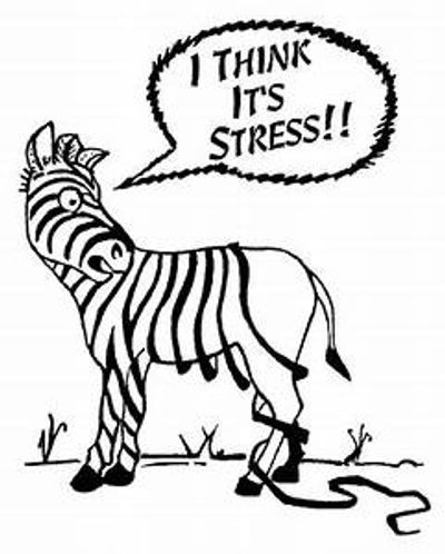 Stress, work stress, life stress, need stress reduction, need stress management? Schedule today!