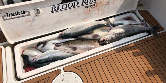 Racine salmon fishing located between Milwaukee and Chicago.  blood run tackle okuma  big weenie