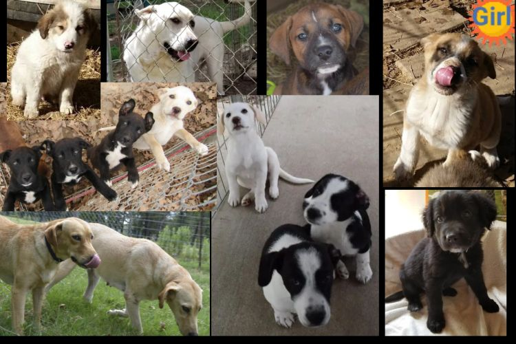 Korky's Rescues Adopted Puppies and Dogs