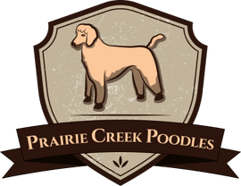 Prairie Creek Poodles
