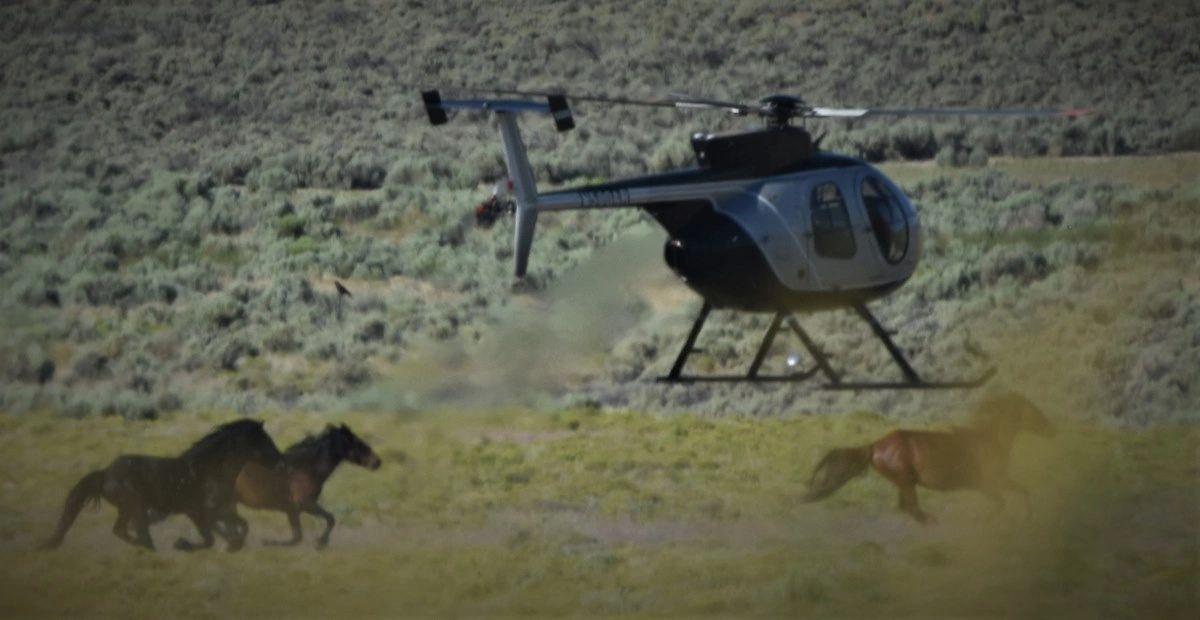"{""blocks"":[{""key"":""ba4a5"",""text"":""Heftily paid helicopters are hired to scare and stampede  the wild horses into traps. The BLM calls these \""Round-Ups\"""",""type"":""unstyled"",""depth"":0,""inlineStyleRanges"":[],""entityRanges"":[],""data"":{}}],""entityMap"":{}}"