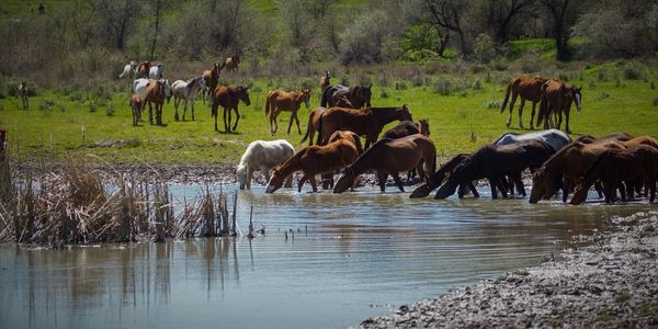 We  invite you to help us save our wild horses by developing our next life sustaining water source.