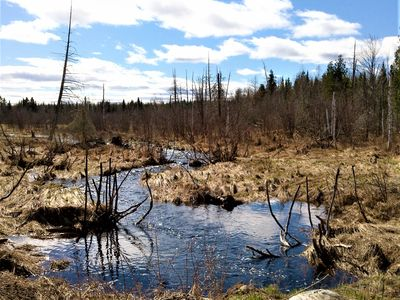 Stockley Creek is surrounded by wetlands that would be destroyed by sulfide mining.
