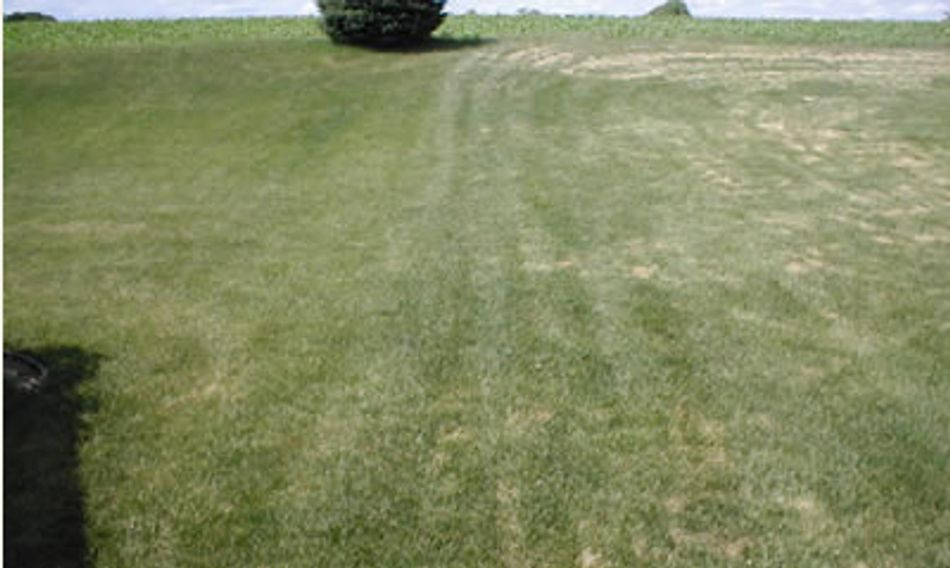Left organic granular fertilizer -To the Right results with a standard granular