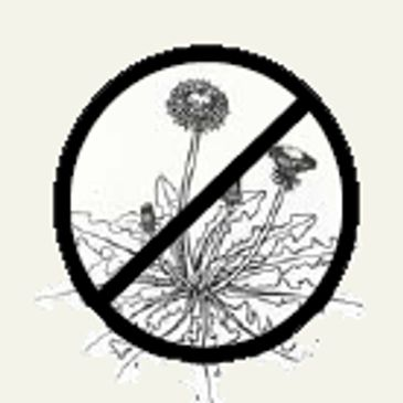 Kill / Control Dandelions + Hundreds more weeds in Rockford IL & Northern Illinois