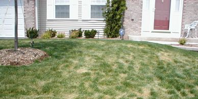 Lawn has fungus disease needs fungicide and or organic base fertilizer program dome by Aaron's