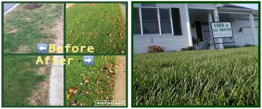 Fungus before & after Treatment in West Dundee. Yard of the month Boone county Gardner's -Lawn Care