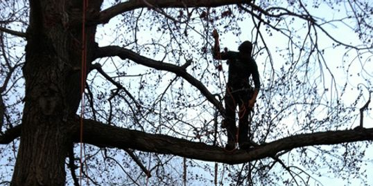 Tree Trimming Service in West Hartford, CT