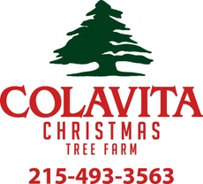 Colavita Christmas Tree Farm 215.493.3563