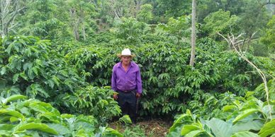 farmer with purple shirt surrounded by coffee plants