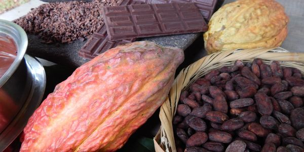 A display from bean to bar. Cacao seeds and chocolate bars in a farm near La Ceiba, Honduras