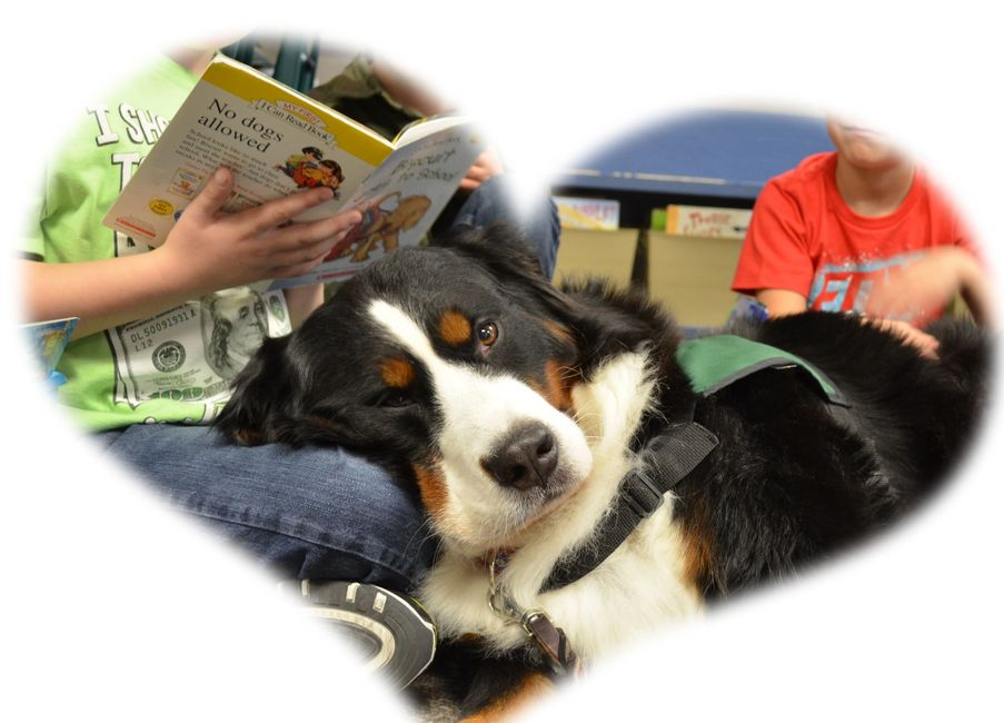Certified therapy dog, Kiana, helping young readers achieve confidence with their reading skills
