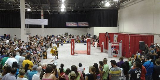 Hugh crowd enjoying Agility Racing, Frisbee Dogs, Trick Dogs, Dancing Dogs and K9 High Jumping.