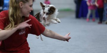 trick dogs, dancing dogs,Frisbee dogs,  mini-shows, inexpensive, events, parties, fairs, festivals