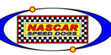 NASCAR, speed dogs, driver, dogs, oval dog track, driver's numbered vests, agility racing, speedways