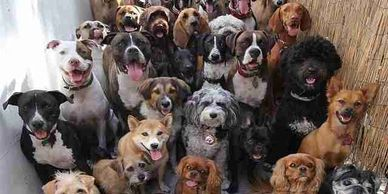 dog Socialization, puppies, adults, group class, aggression, fears, bad behaviors, good dog class
