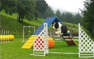 beginner agility dog training, A frame, jumps, tunnels, dog sport, obstacle course, saginaw, fun