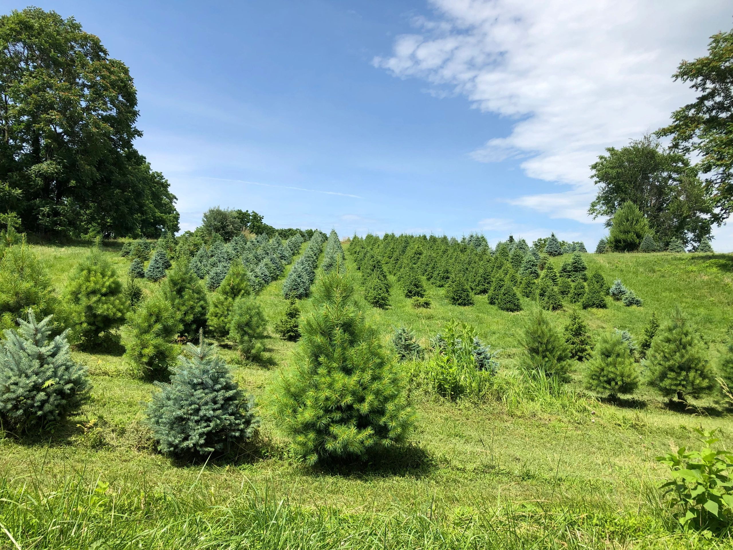 Hartland Farm And Orchard Pick Your Own Markham Virginia Hartland Farm And Orchard