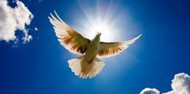 A dove to represent hope, something greater and beyond us.