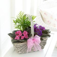 Pink and purple planted basket mother's day flower arrangement