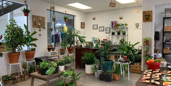 The House of Plants Atelier at Bonita Road