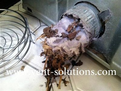 Pest Guards Cages Vent Solutions Dryer Vent Cleaning