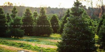 Products On The Farm Bottoms Christmas Tree Farm - Christmas Tree Farm In Virginia