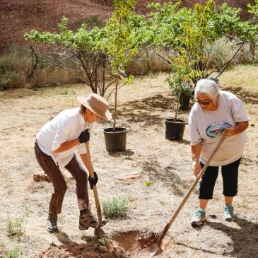Planting at Sylvia Watchman's property, Canyon de Chelly.